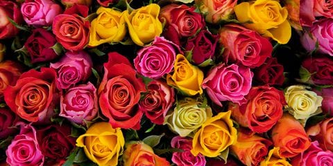 Rose Flower Meanings By Their Color